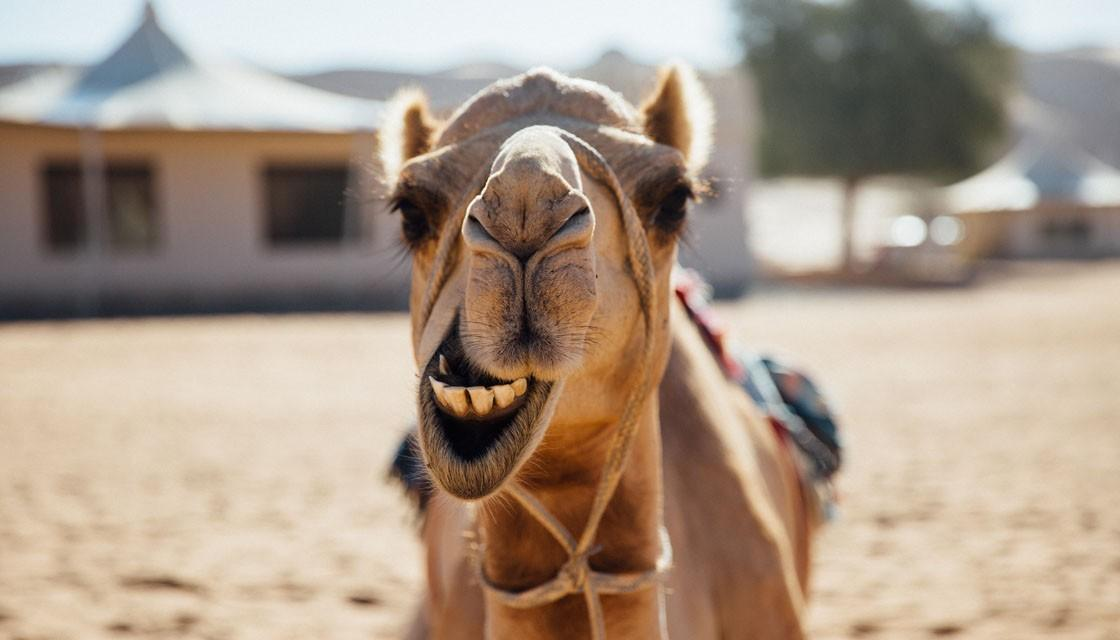641054553-getty-undoctored-camel-1120